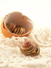 Shells and Crochet