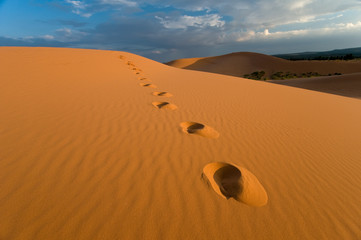 Footprints, Coral Pink Sand Dunes