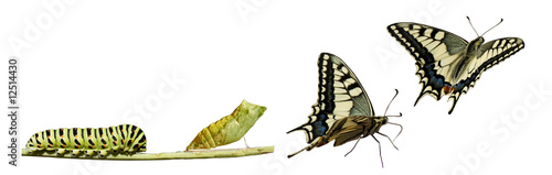 Leinwandbild Motiv Butterfly metamorphosis