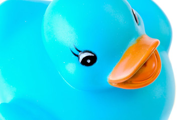 Blue plastic duck