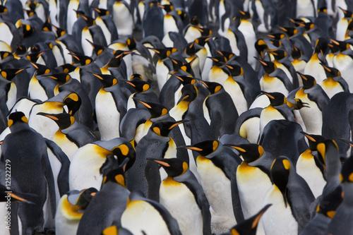 Foto op Plexiglas Pinguin königspinguine