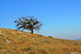 Single tree on island hill, south Croatia poster