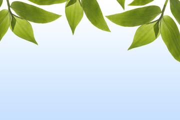Blätter vor blauem Verlauf