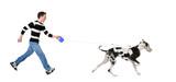 Man walking his dog (Great dane 4 years) poster