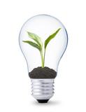 Fototapete Konzept - Konzeptionell - Birne / Lampe