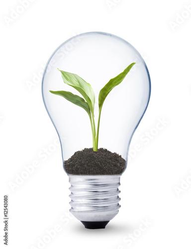 Fototapeta koncepcja - pojęciowy - Żarówka / Lampa