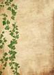 Grunge vine background