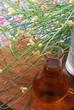 Fiori di rucola - Cucina alle erbe e fiori eduli