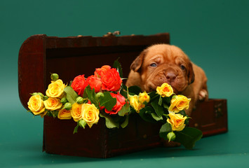 Pup with a flowers.