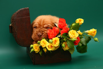 A puppy with a flowers is in a trunk.