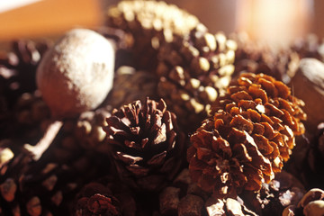 Close up of a group of pine cones