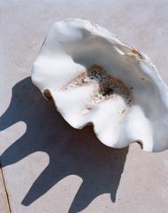 Seashell and Shadow