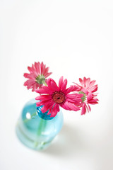 Above view of several pink daisies in pale blue vase
