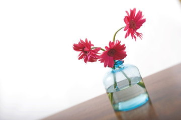 Pink daisies on pale blue vase on wooden table
