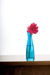 Turquoise vase with single pink daisy on wooden table