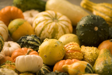 Assorted gourds, miniature pumpkins, and seasonal squashes