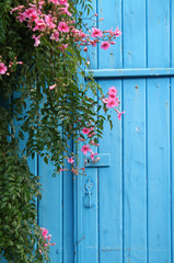 Pink flowers and plants are seen against a blue door