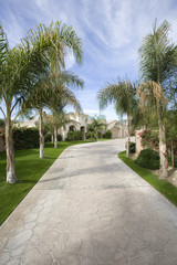 A paved path with palm trees on both sides are seen outside the house