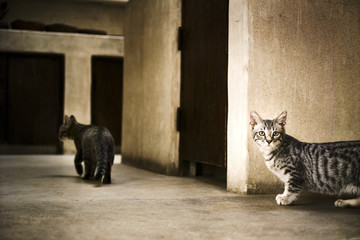 Two cats walking inside the house