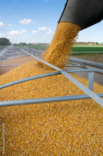 Plexiglas Granen Corn Harvest