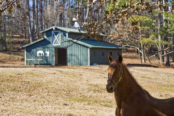 Horse and Green Barn