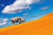 Desert fantasy, elephants walking