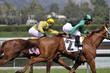 Two Race Horses & Jockeys
