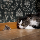 Cat staring at a mouse coming out of her hole - Fine Art prints