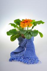 Flower got Cold