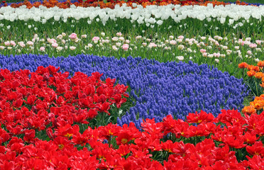 Multicolored flower bed