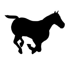 beautiful horse isolated on a white background