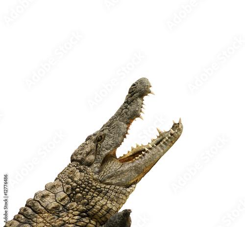 Poster Alligator will fressen
