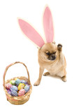 Easter Doggy poster