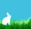 Lapins blanc sur l'herbe
