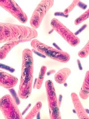 isolierte bakterien