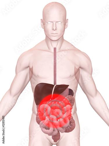 GamesAgeddon - menschliche anatomie mit schmerzen im bauch ...