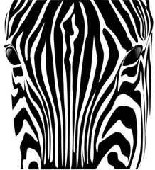 testa zebra