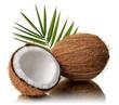 Coconuts 6