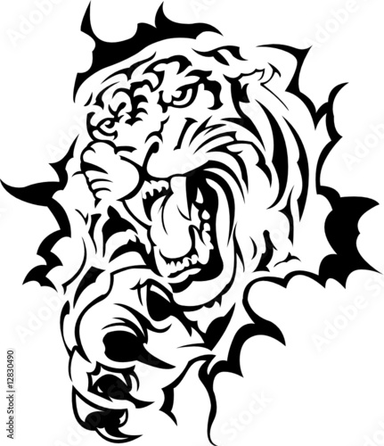 Tiger roar vector - photo#19