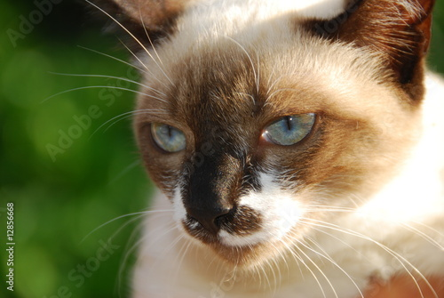 Fototapeten,katze,auge,eye,kitty