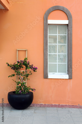 Flower Pot and Window