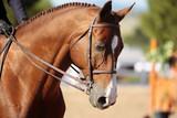 Horse's Head in Morning Sunlight (shallow focus)