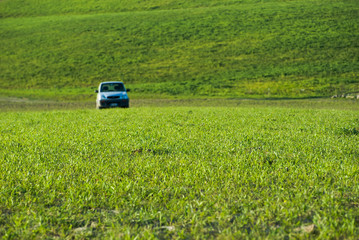 selective focus of green grass on background blurred car