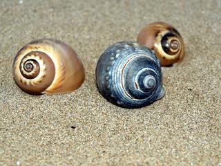 coquillages de mer