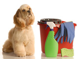house training a puppy - cocker spaniel sitting beside bucket poster