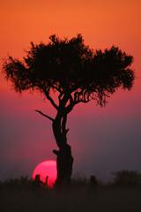 African sunset at Masai Mara,Kenya