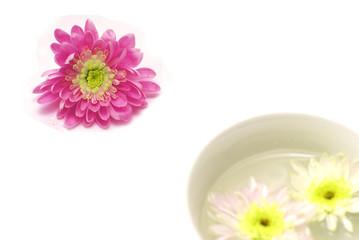 Aroma and elegance of chrysanthemums
