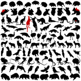 Hundred silhouettes of wild rare animals from Australia