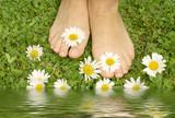 Fototapety gesunde Füße, Füsse auf Wiese mit Margariten, barfuß, Copyspace