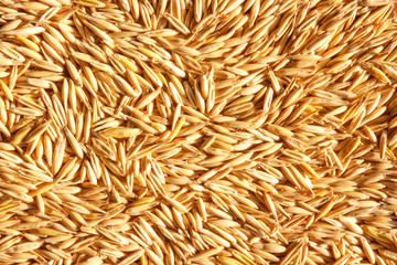 grains of oat